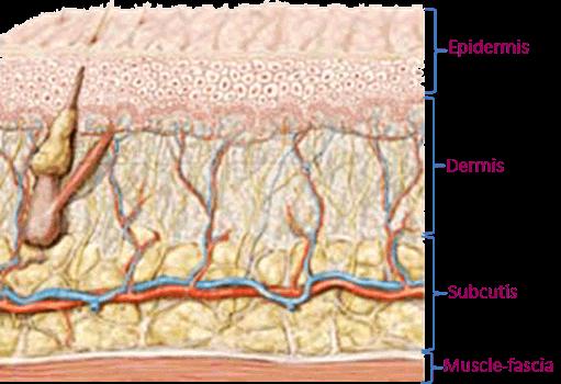 Dermaroller skin depth