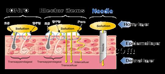 dermaroller microneedle, Derma roller