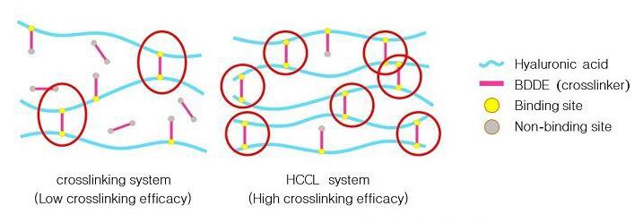 HCCLCross linking HA